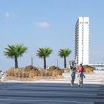 Palmbomen Zandvoort